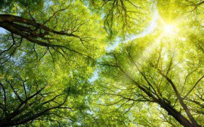 100 % – a fenntarthatóságról szerintünk